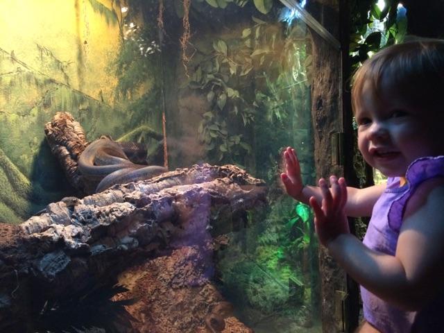 Virginia Aquarium (15)