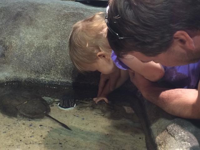 Virginia Aquarium (2)